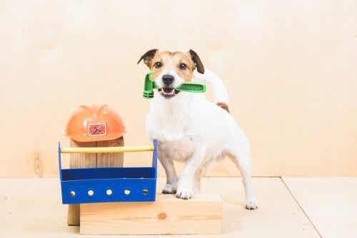 Quelles sont les cinq ordres que vous pouvez enseigner à votre chien ?