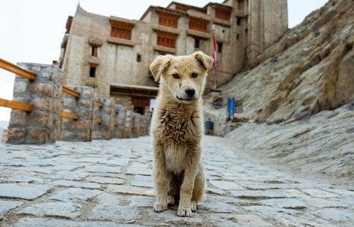 Un chien est perdu sur une route abandonnée