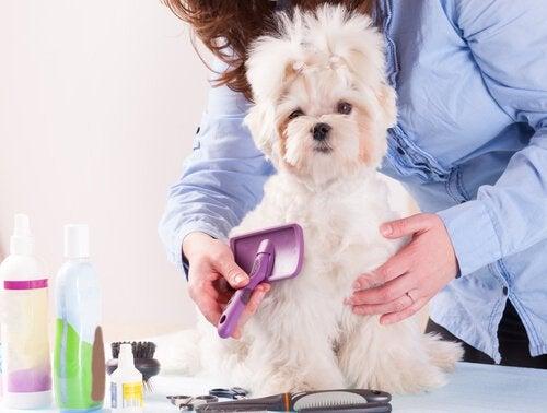 Une jeune femme brosse les poils de son chien avec une brosse