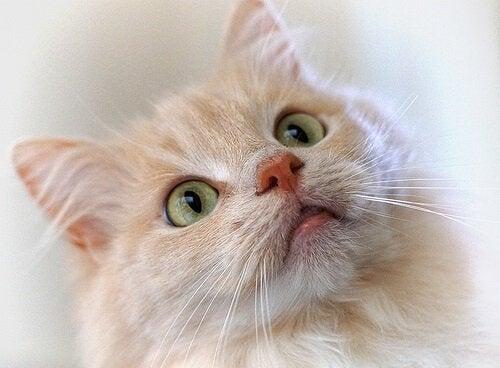 Le dressage d'un chat avec un clicker