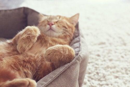 un chat endormi sur le dos dans son panier