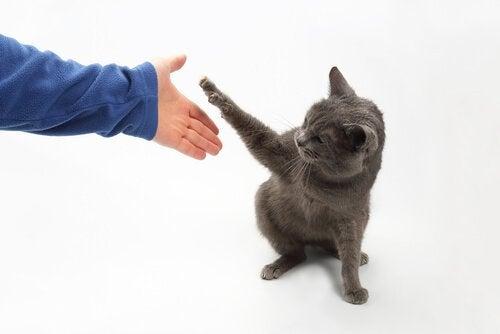 un chat joue avec une personne