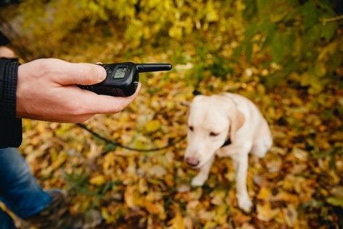 un chien en laisse dans la forêt et un homme avec une radio