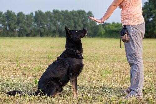 un chien assis obéit à une femme