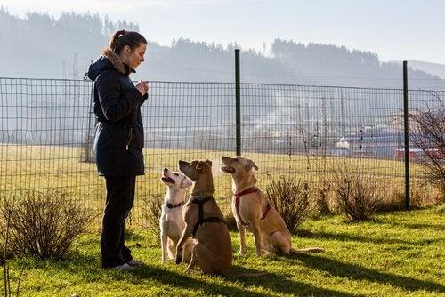 trois chien autour d'une femme l'écoutent
