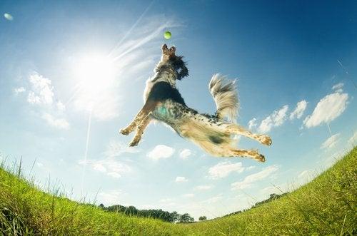 chien qui attrape une balle au vol