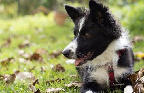 6 comportements instinctifs chez les chiens