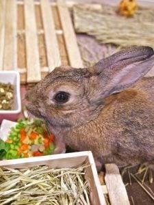 noms de lapins