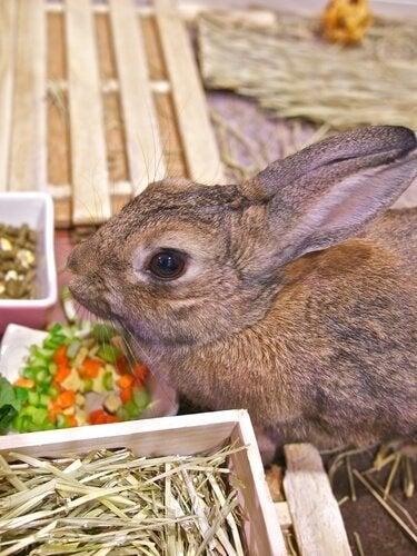 un lapin qui mange des légumes coupés