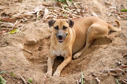 chien qui pose ses pattes dans un trou