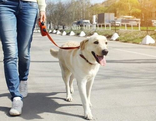 chien en laisse qui se promène en ville avec son maitre