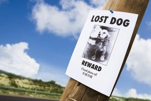 affiche avec la photo d'un chien perdu