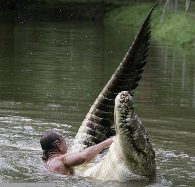 homme qui joue dans l'eau avec un crocodile