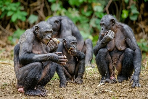 Un groupe de singe mange, assis
