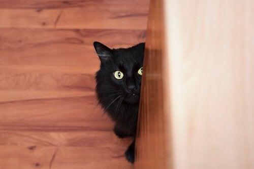 chat noir effrayé qui se cache