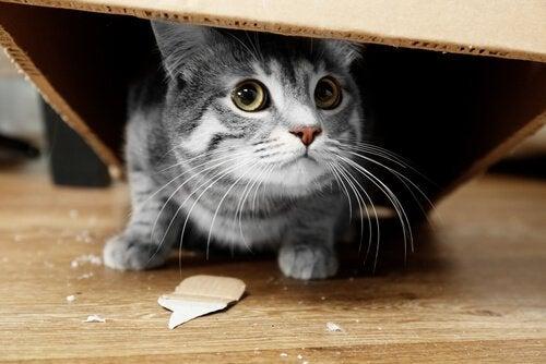 chat qui a cassé un objet et qui se cache