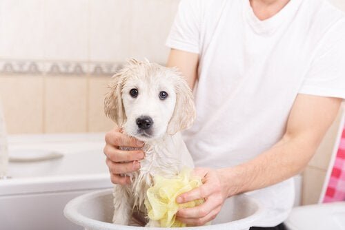homme qui nettoie son chien dans une bassine