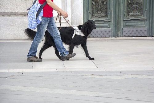 Un chien et son maître dans la rue