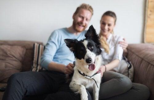 les millennials adorent les chiens