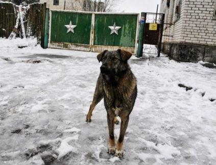 chien sur un sol neigeux à Tchernobyl