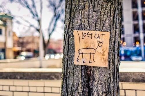 affiche de chat perdu sur un arbre