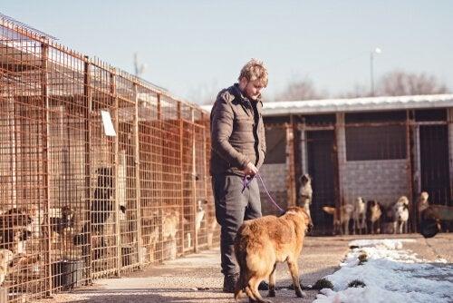 les bénévoles promènent les chiens