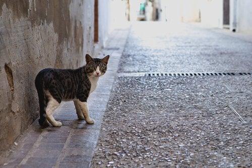 Pourquoi les chats sortent et reviennent à la maison