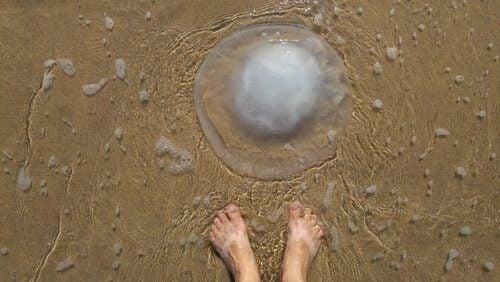Comment réagir face à une méduse