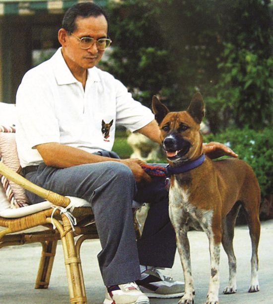 Un roi qui adopte des chiens errants
