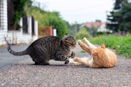 La cohabitation de deux chats dans une maison