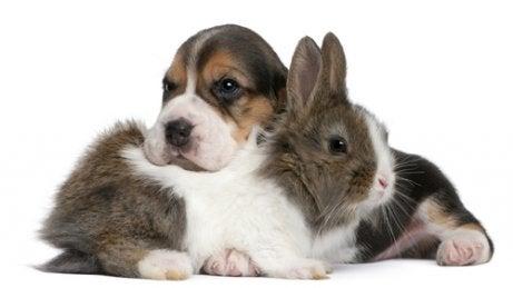 La cohabitation entre un chien et un lapin