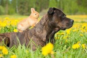 lapin et chien ensemble