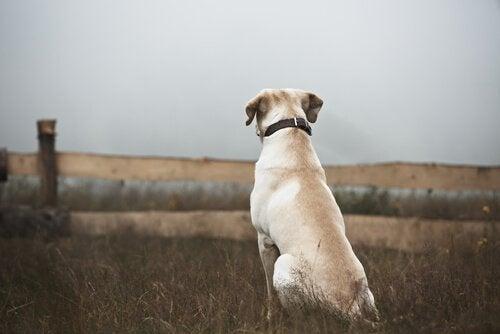 chien  qui regarde au loin