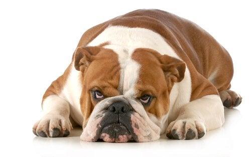 Voici ce que votre chien déteste