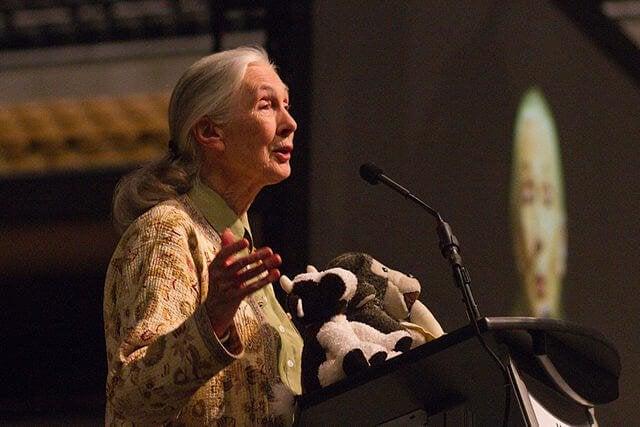Jane Goodall qui prononce un discours sur les primates