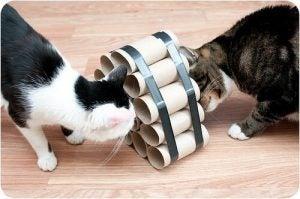 jouets faits maison pour chats : le puzzle de récompenses