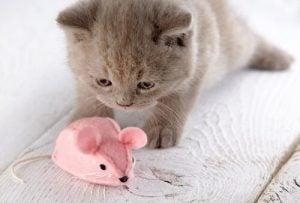 jouets faits maison pour chats : peluche avec de l'herbe à chat