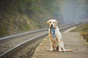 chien qui attend près d'un voie ferrée comme Hachiko