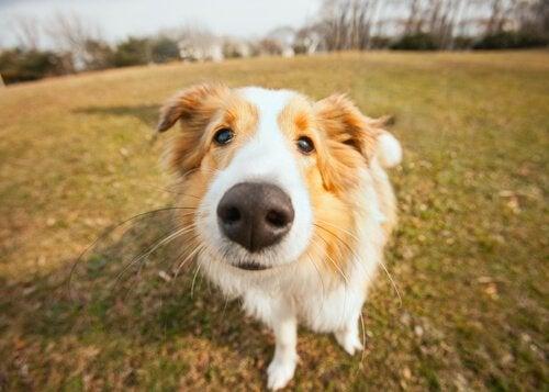 Comment s'occuper d'un chien qui a le museau sec