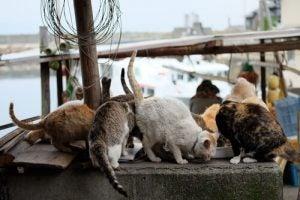 îles aux chats