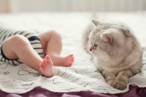 les chats peuvent être amis avec les bébés