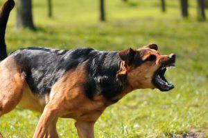 comment approcher un chien craintif