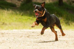 assurance pour votre chien
