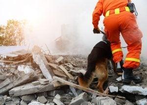 le sauvetage de personnes disparues fait partie des métiers que les chiens peuvent exercer