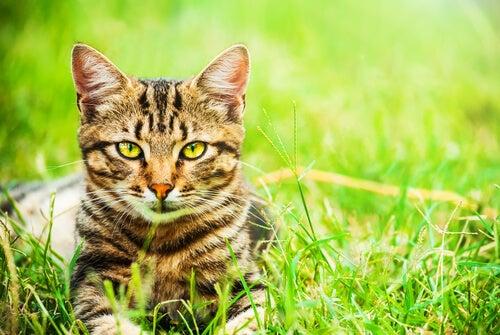 5 raisons de choisir un chat métis
