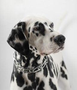 colliers de punition pour chiens