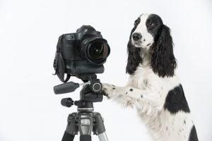 prendre de bonnes photos de votre animal