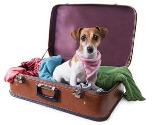 partir en vacances avec votre chien