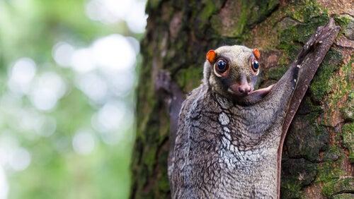 5 espèces d'animaux arboricoles