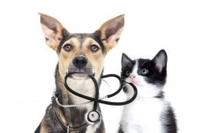 chien et chat prêts à passer un examen de santé